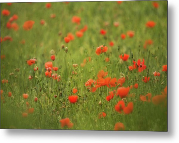 Worcestershire Poppy Field Metal Print by Wayne Molyneux