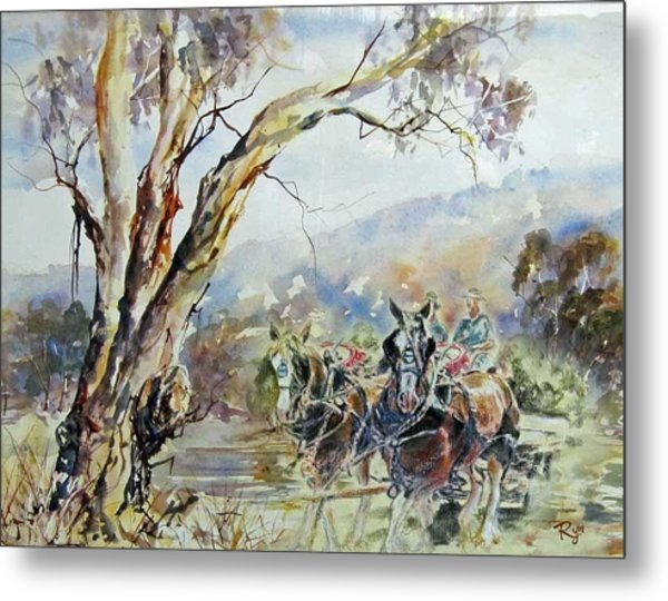 Working Clydesdale Pair, Australian Landscape. Metal Print