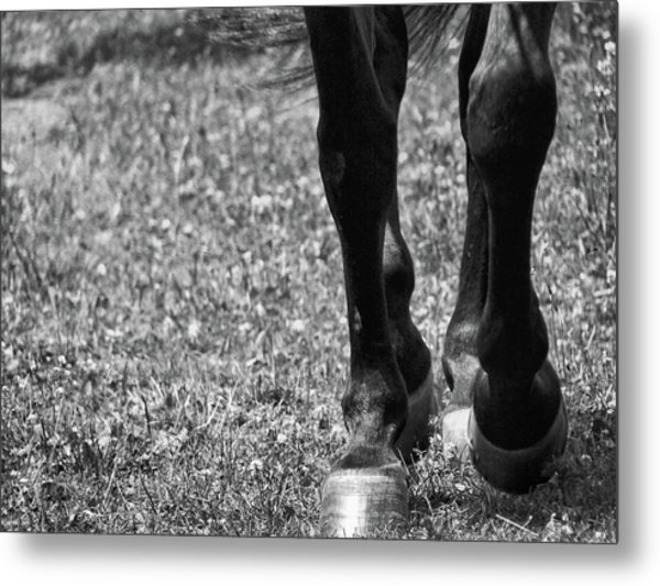 Working Trot Metal Print by JAMART Photography
