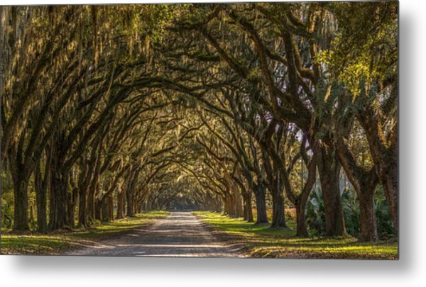 Wormsloe Historic Site Metal Print