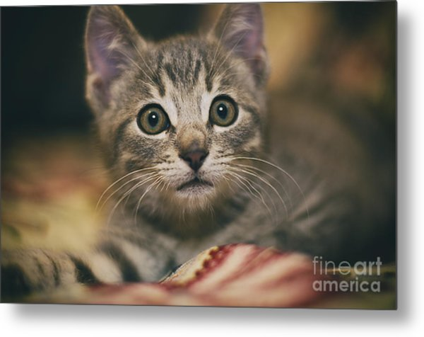 Worried Little Eyes Metal Print by Alessandro Giorgi Art Photography