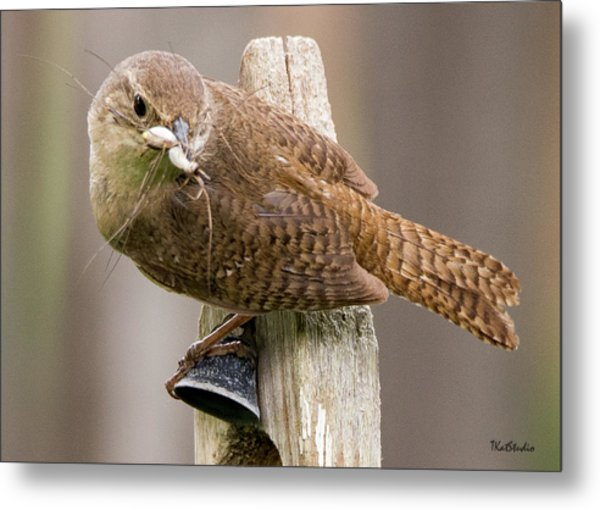 Wren Ringing The Dinner Bell Metal Print