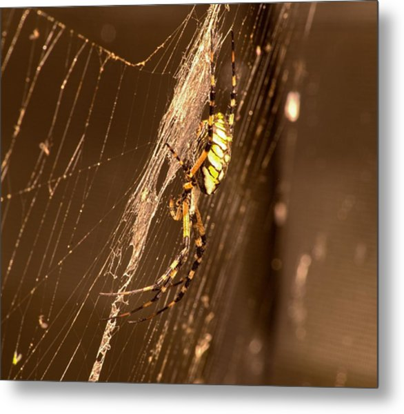 Writing Spider Metal Print
