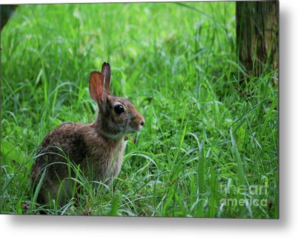 Yard Bunny Metal Print