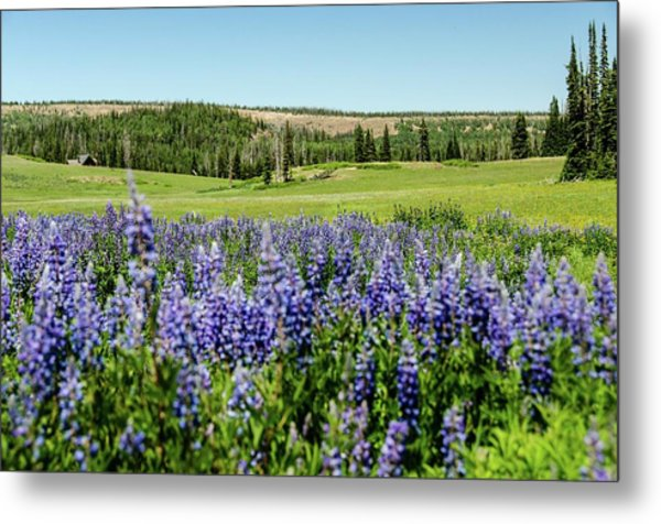 Yard Full Of Wildflowers Metal Print