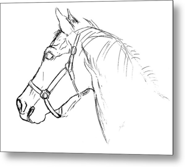 Yearling White Metal Print by JAMART Photography