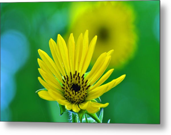 Yellow And Green Metal Print by Peter  McIntosh