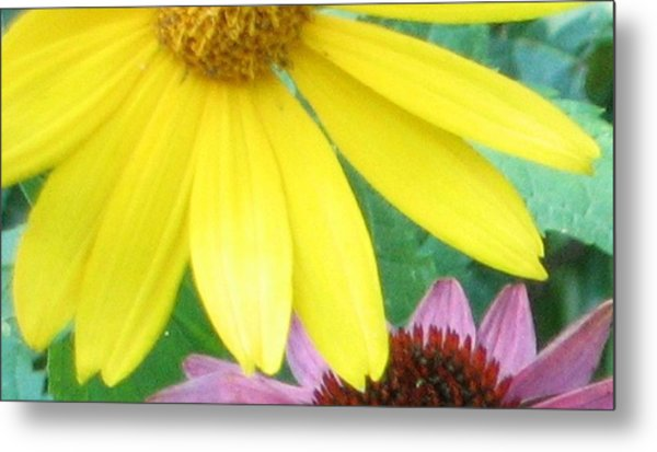 Yellow And Purple Metal Print by Krista Barth