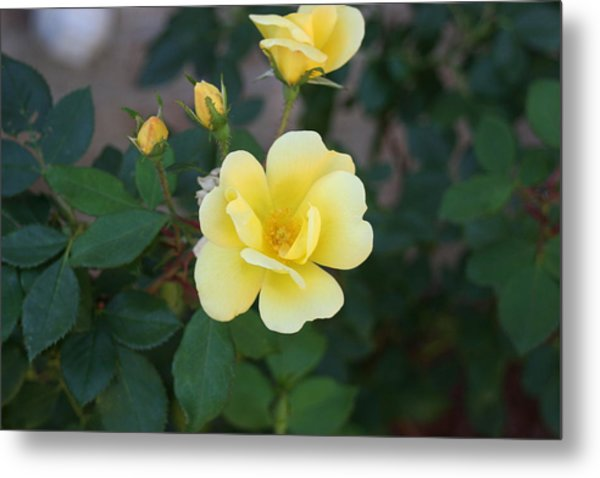 Yellow Metal Print by Bret Worrell