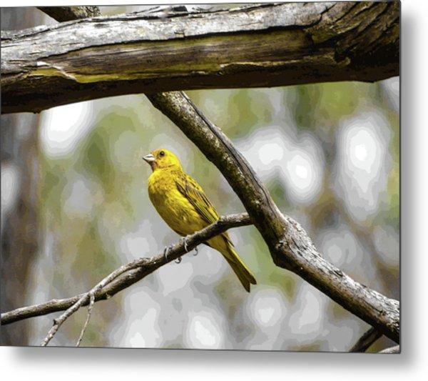 Yellow Canary Metal Print