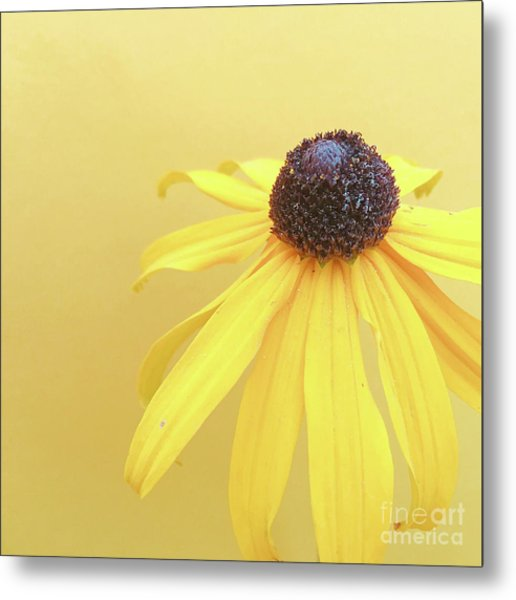 Metal Print featuring the photograph Yellow by Cindy Garber Iverson