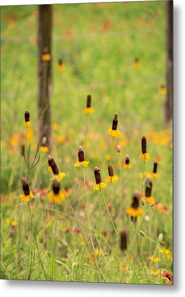 Yellow Cone Flower Metal Print