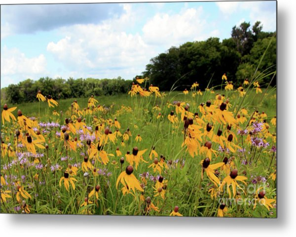 Yellow Cone Flowers Metal Print