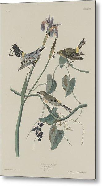 Yellow-crown Warbler Metal Print