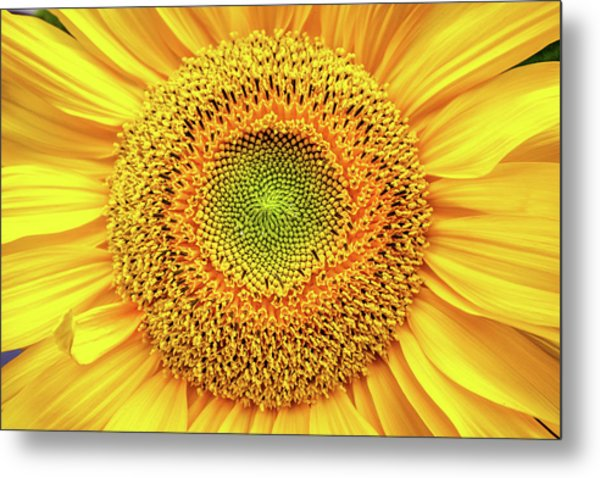 Yellow Eye Metal Print