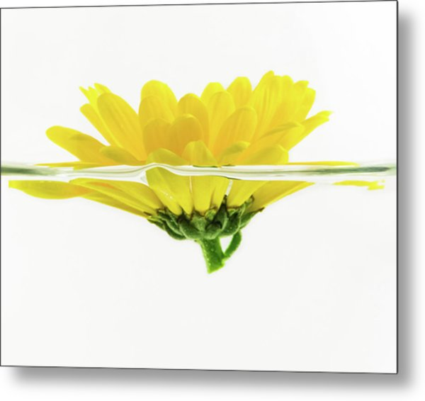 Yellow Flower Floating In Water Metal Print