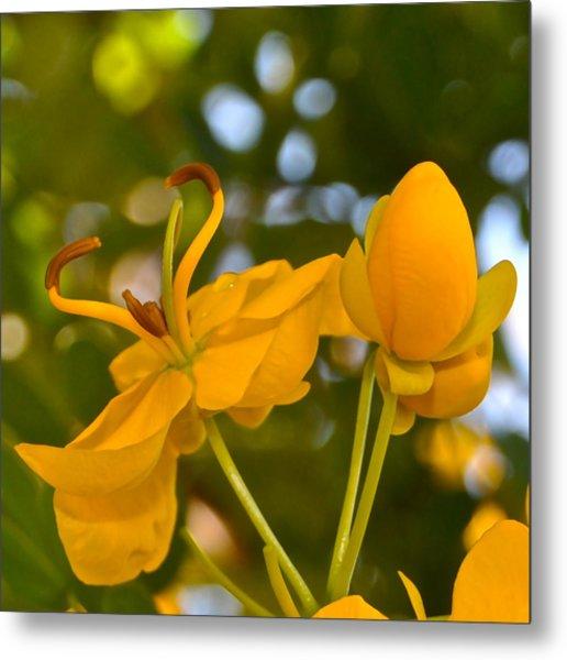Yellow Flower Metal Print by Lori Kesten
