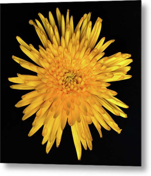 Yellow Flower Macro Metal Print