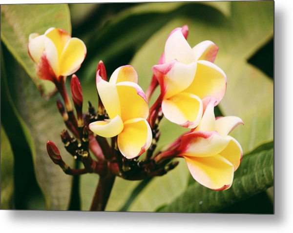 Metal Print featuring the photograph Yellow Flower by Martina Uras