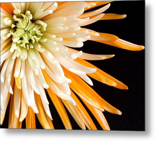 Yellow Flower On Black Metal Print