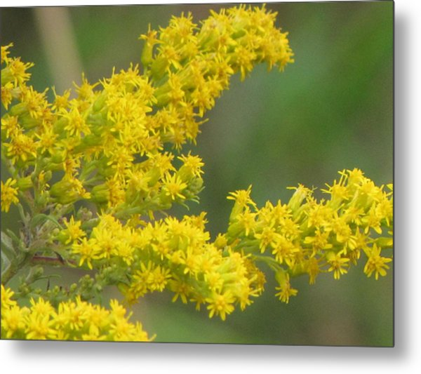 Yellow Flowers Metal Print by Sylvia Wanty