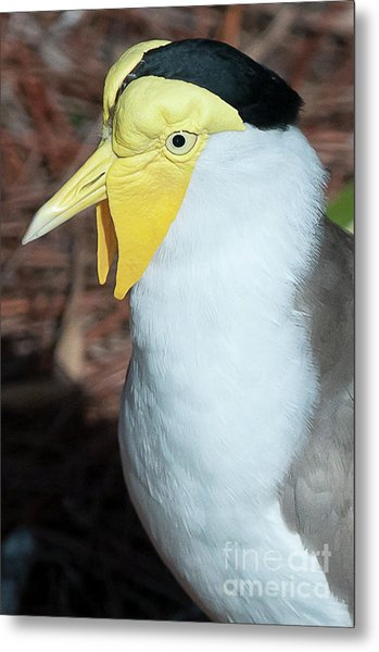 Yellow Headed Bird Metal Print