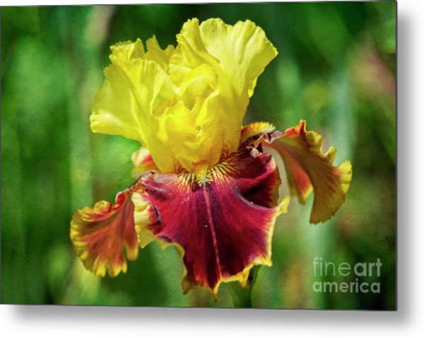 Metal Print featuring the photograph Yellow Iris by Craig Leaper