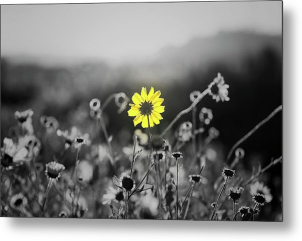Yellow Is The Color Metal Print