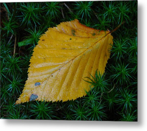Yellow Leaf Metal Print by Juergen Roth