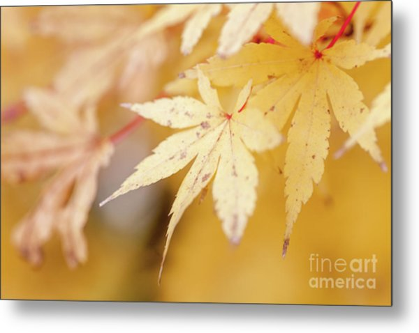 Yellow Leaf With Red Veins Metal Print