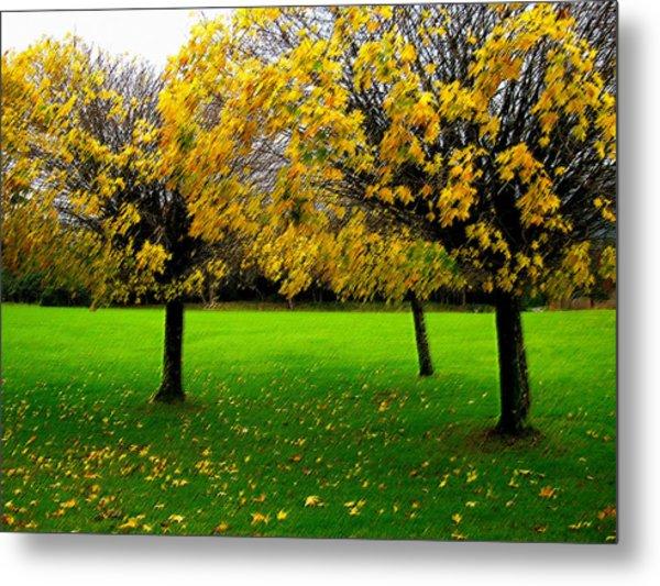 Yellow Leaves At Muckross Gardens Killarney Metal Print