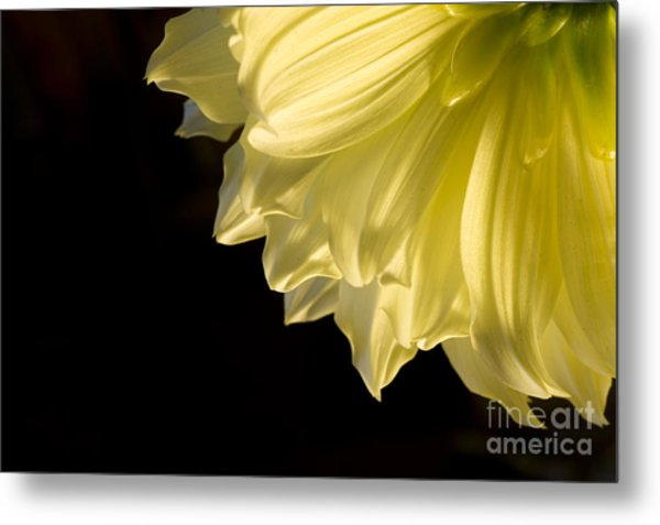 Yellow On Black Metal Print by Ronald Hoggard
