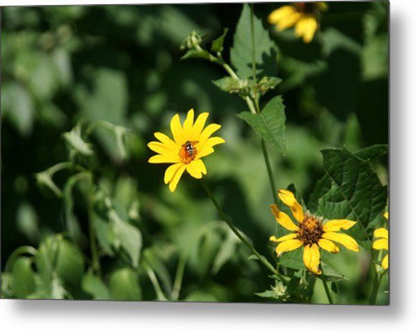 Yellow On Yellow Metal Print by Gregory Jeffries