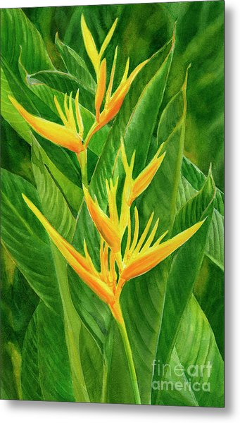 Yellow Orange Heliconia With Leaves Metal Print