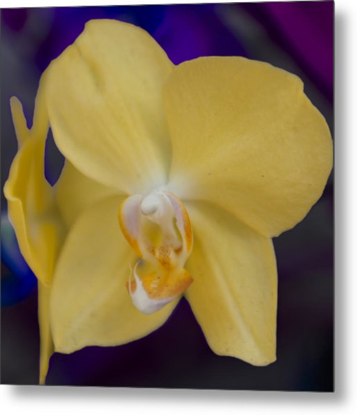 Metal Print featuring the photograph Yellow Orchard by Linda Constant