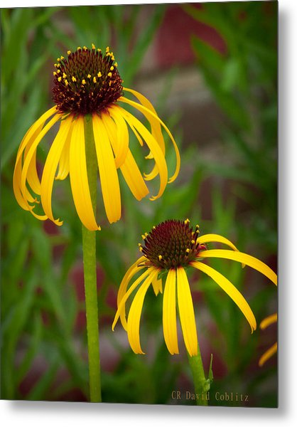 Metal Print featuring the photograph Yellow Pair by David Coblitz