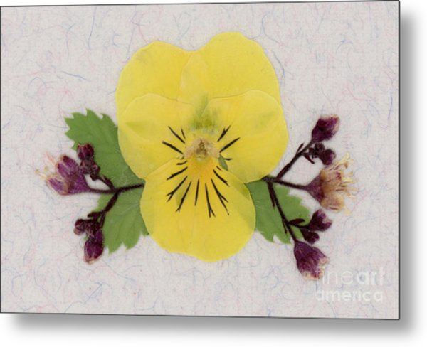 Yellow Pansy And Coral Bells Pressed Flowers Metal Print