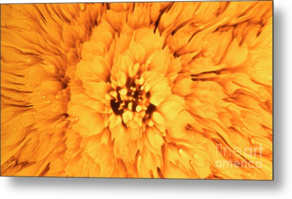 Yellow Flower Under The Microscope Metal Print