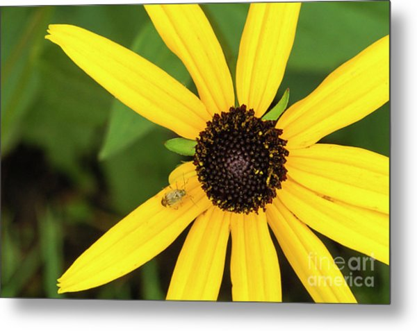 Yellow Petaled Flower With Bug Metal Print