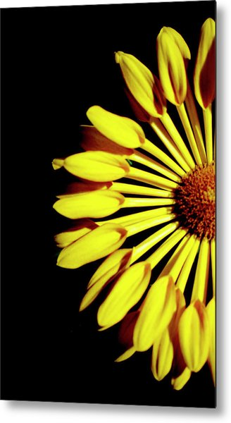 Yellow Petals Metal Print
