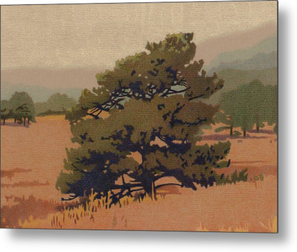 Yellow Pine Metal Print