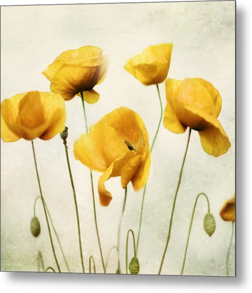 Yellow Poppies - Square Version Metal Print