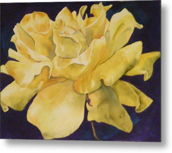 Yellow Rose 101 Metal Print