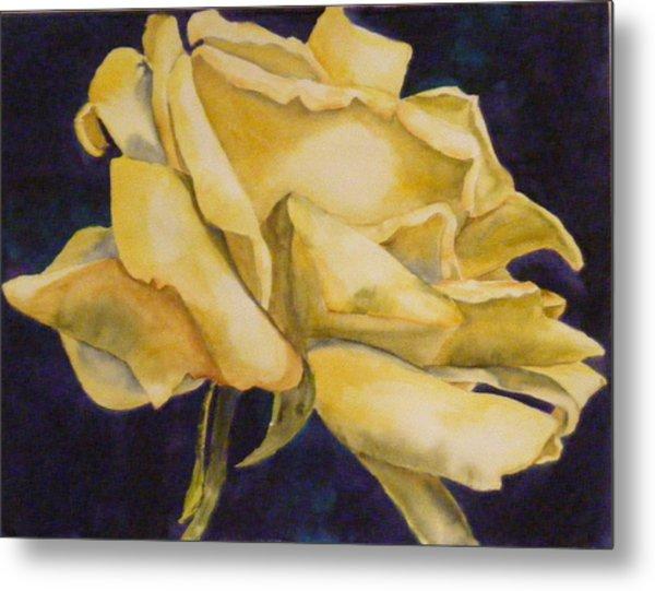 Yellow Rose 102 Metal Print