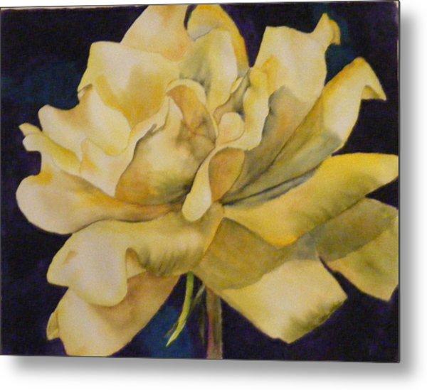 Yellow Rose 103 Metal Print