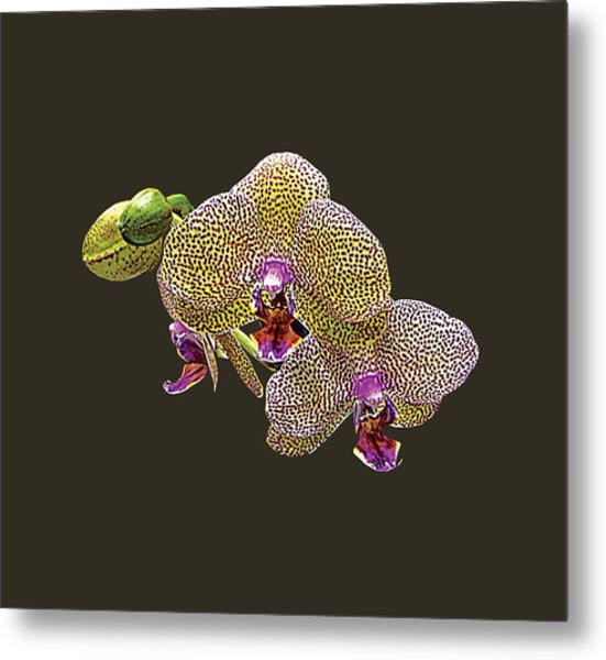 Yellow Spotted Orchid Metal Print by Susan Savad