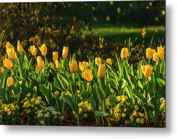 Yellow Spring Fever Metal Print