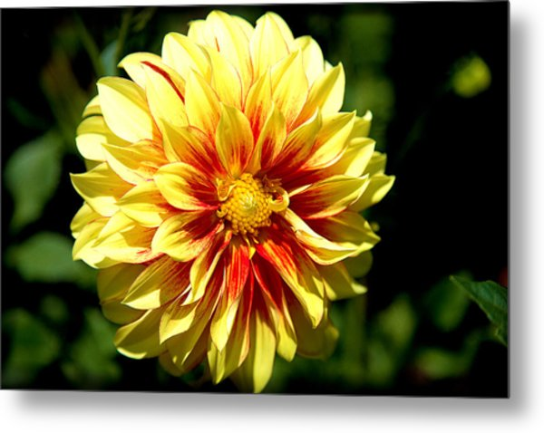 Yellow Sunshine Metal Print