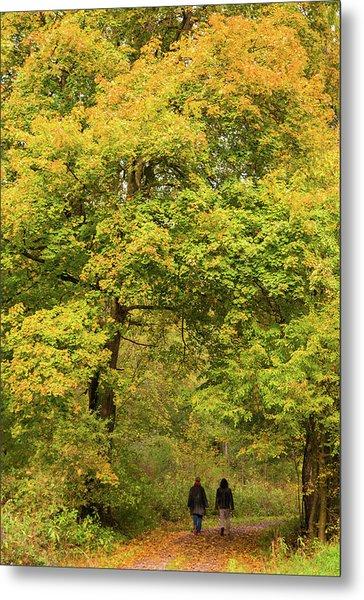 Yellow Trees In Fall Metal Print