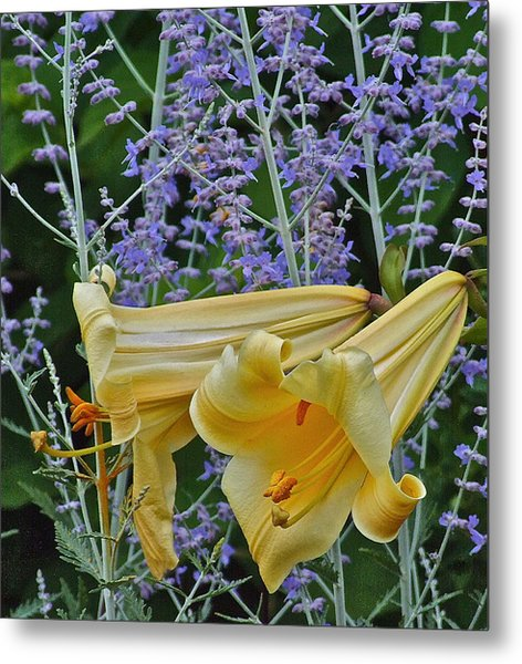 Yellow Trumpets Metal Print